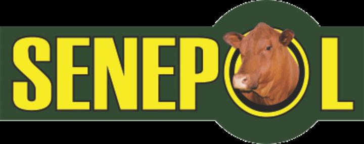 Nasionale Senepol, Circle C Ranches, Excelsior