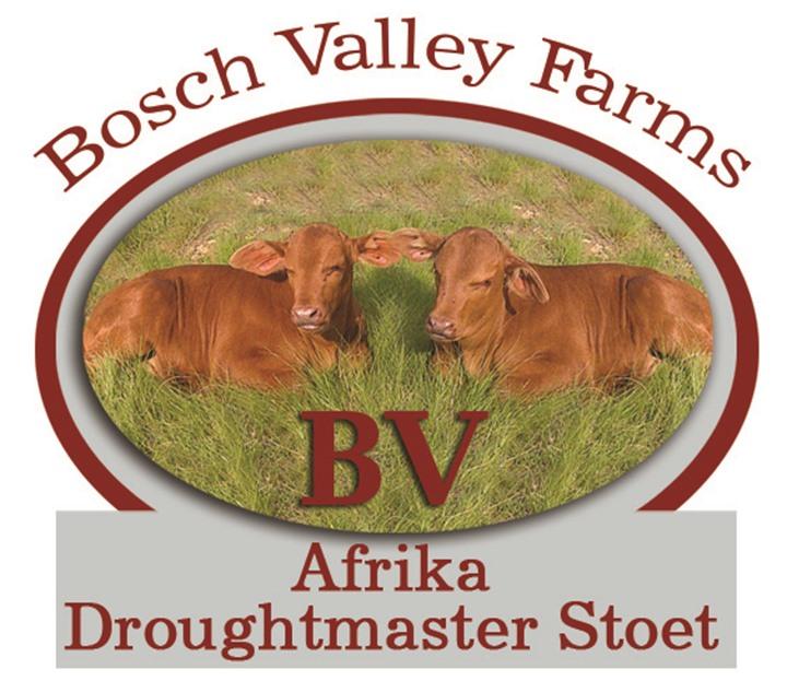 Bosch Valley Farms Droughtmaster & SA Vleismerino Produksie Veiling