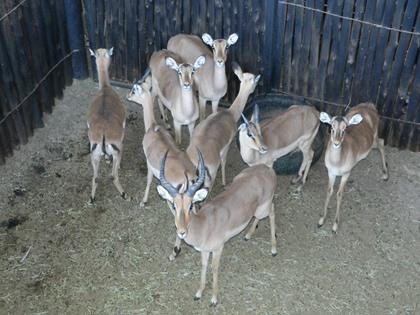 Rooibok Familiegroep