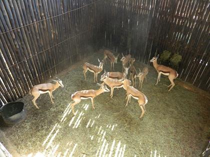 Springbok Familiegroep